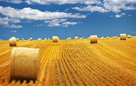Procesamiento agrícola